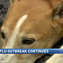 For Reno veterinarians, dog flu & symptoms persist