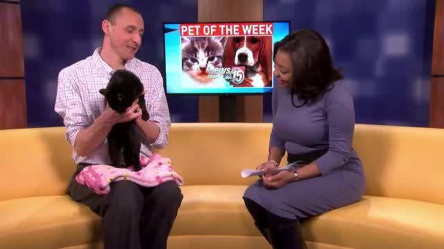 Pet of the Week: Jacqueline