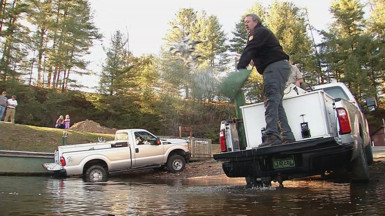 WVDNR fisheries biologist, Mark Scott, stocks a net full of rainbow trout into Stephens Lake. (WCHS/WVAH)<p></p>