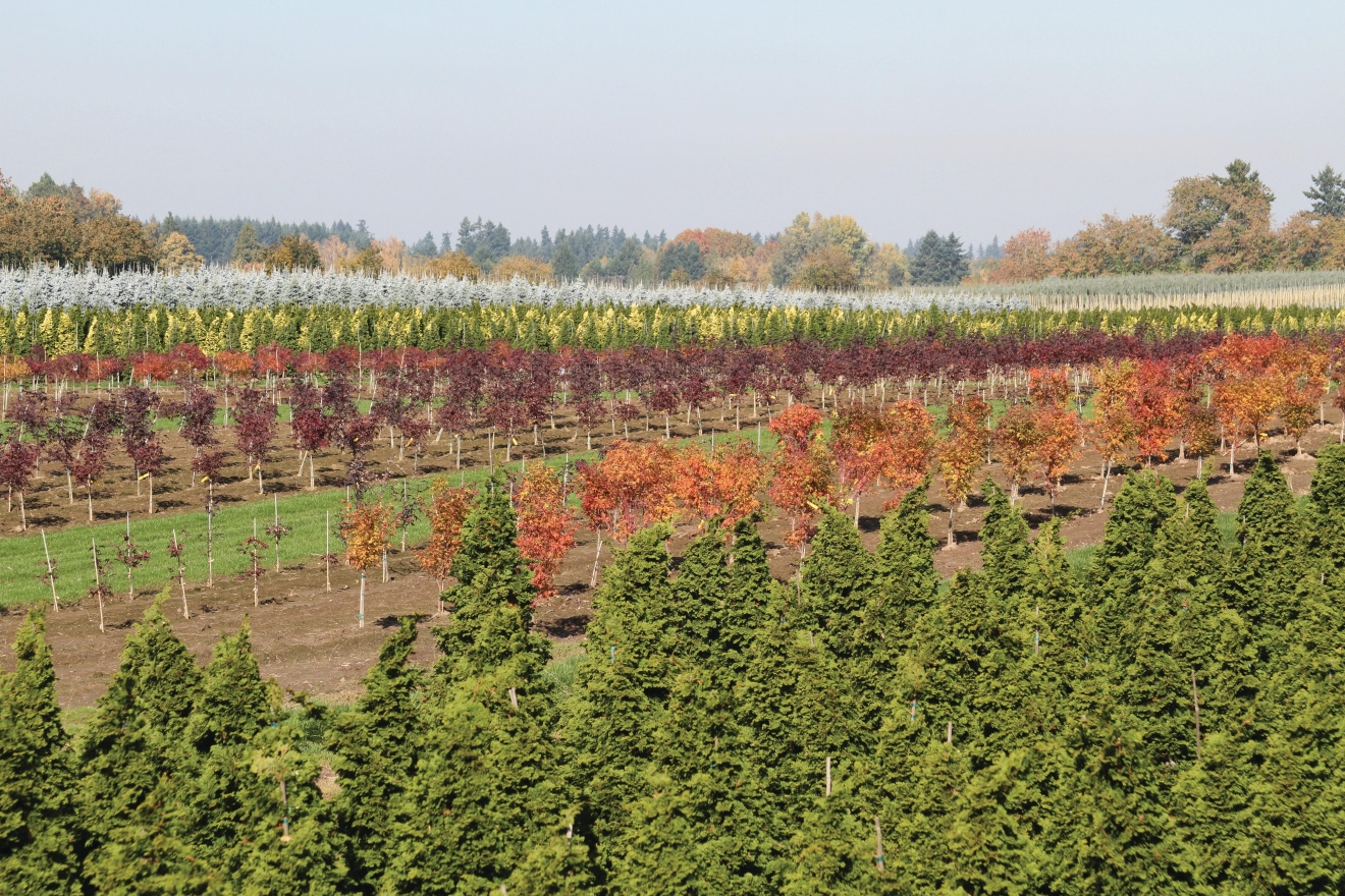 This picture of the Countryside Nursery in Aurora, Oregon doesn't just show the beauty of trees – it shows an important part of Oregon's GDP!