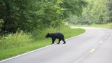Lynchburg Police warn of bear sightings