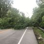 Downed trees cause headache for Gainesville commuters