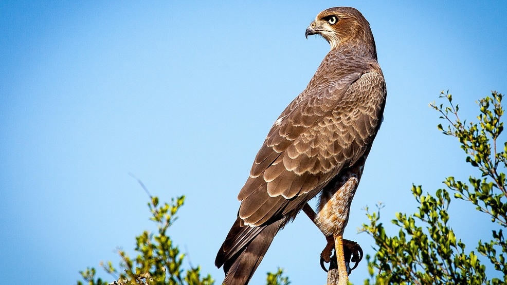 Falcons leave nest, opening rock climbs near Monticello