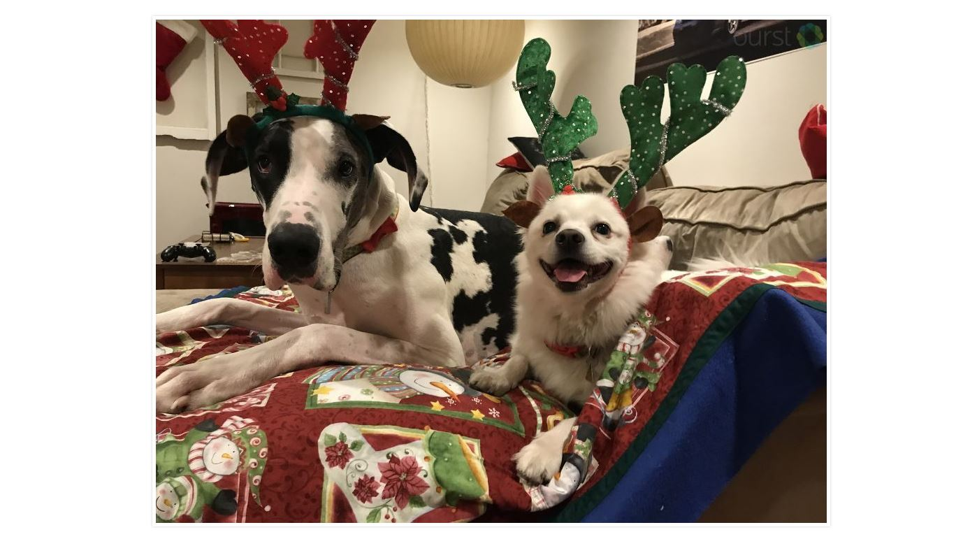 Stellaluna and Severus Christmas, submitted by Katie Carman. Submit your photos HERE:{ }www.burst.com/idahonews