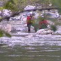 Rescuers suspend search for missing swimmer at Eagle Falls
