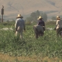 Lawsuit involving 600 Yakima Valley farm workers to go to trial