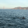Traverse City man swims to Alcatraz for a good cause