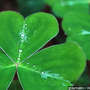 Profitt Report: How the Ancient Order of Hibernians celebrate St. Patrick's Day
