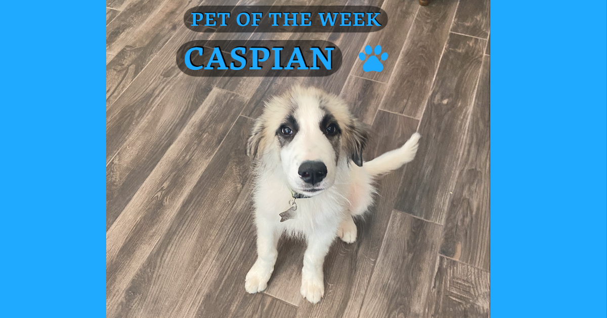 Pet of the Week: Caspian the Great... Pyrenees (Courtesy: Dondi Scumaci)<p></p>