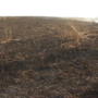 Multiple brush fires could have common cause