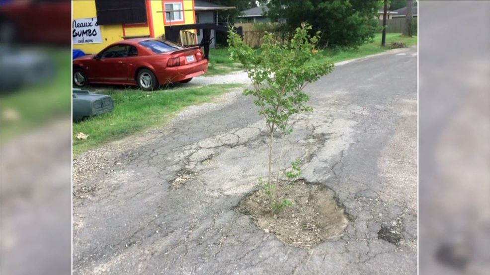 Port Arthur Residents Plant Trees In Potholes To Protest Poor
