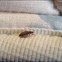 Central Illinois struggles to find solution for bed bugs