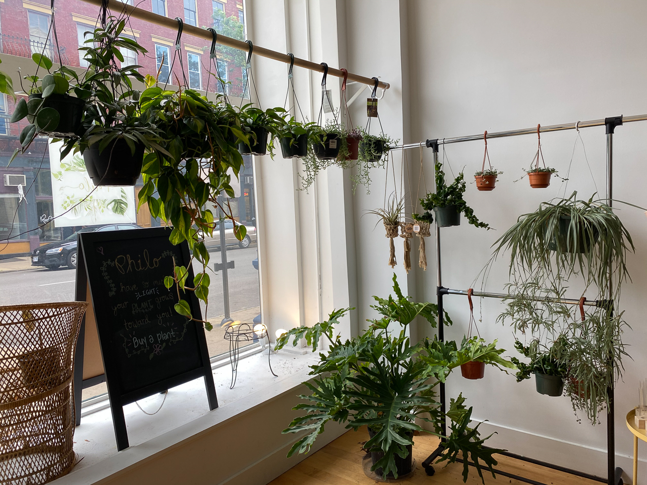 "Savannah Chambers (IG: @Philo_Cincy) from Amelia / ""I try and keep plants all over in the house. Our favorite space is the bedroom. Most of my harder to find and rare plants are here as I want it to be a peaceful and calm space. My favorite plants vary, but my Hoya corner is currently my favorite along side my first 'rare' plant, which is my variegated gigantum. I'd love the room to go full jungle. Plants freely creeping and growing. Golden hour or first thing in the morning is my favorite time to just sit and look around at them."" BUSINESS: Philo Cincinnati (IG: @Philo_cincy) at 1411 Main Street in Over-the-Rhine / Image courtesy of Savannah Chambers // Published: 6.13.20"