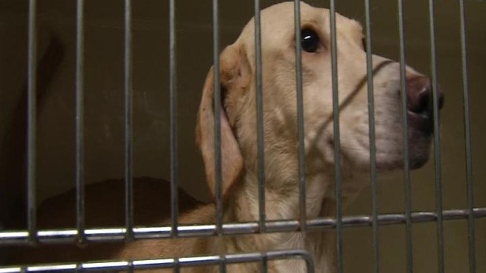 New law helps protect dogs, cats in kennels | WICS