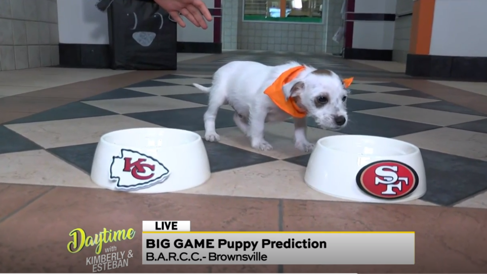 500 Puppy Predictions.PNG