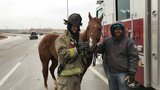 Firefighters wrangle horses following crash on Belle Isle Bridge