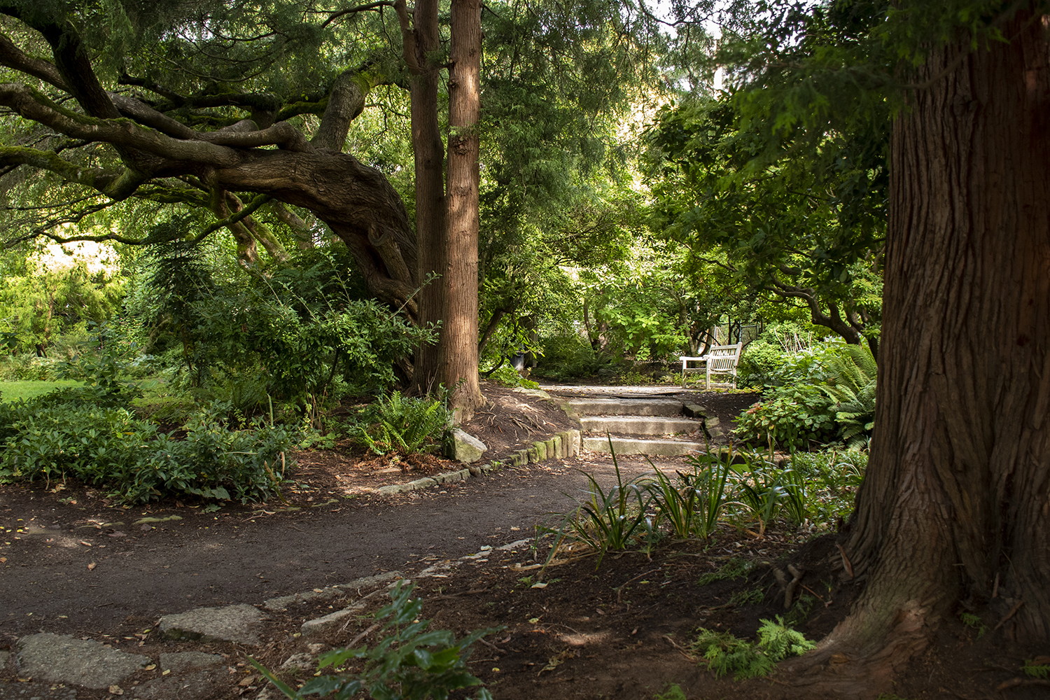 "Parsons Gardens Park in Queen Anne is a true urban oasis with wonderful views almost every day of the year. The small 0.4-acre park is considered a ""secret garden"" and was donated to the city by the children of Reginald H. Parsons in 1956.{ }(Image: Rachael Jones / Seattle Refined)"