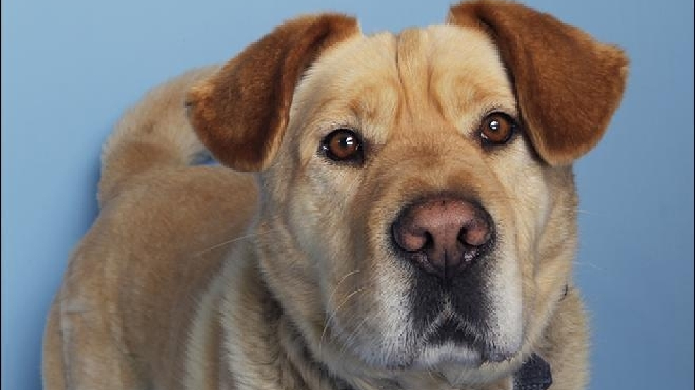 9 adoptable pets from Woodinville's Homeward Pet