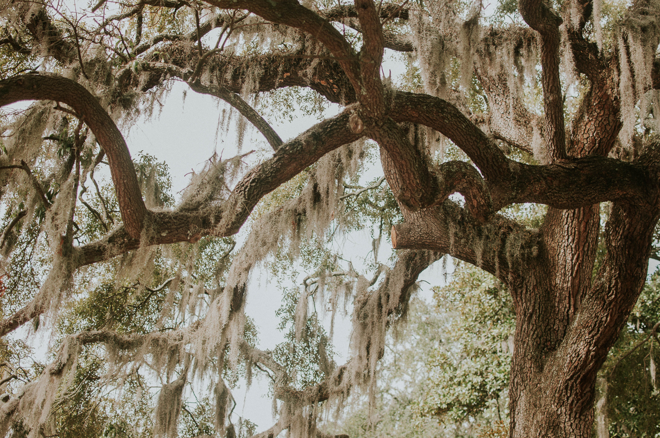 Snap an Instagram-worthy picture of Savannah's famous Spanish moss at Forsyth Park or Bonaventure Cemetery. / Image: Jessica Furtney on Unsplash // Published: 3.8.19