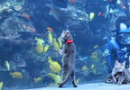 Kittens explore Georgia Aquarium 2.PNG