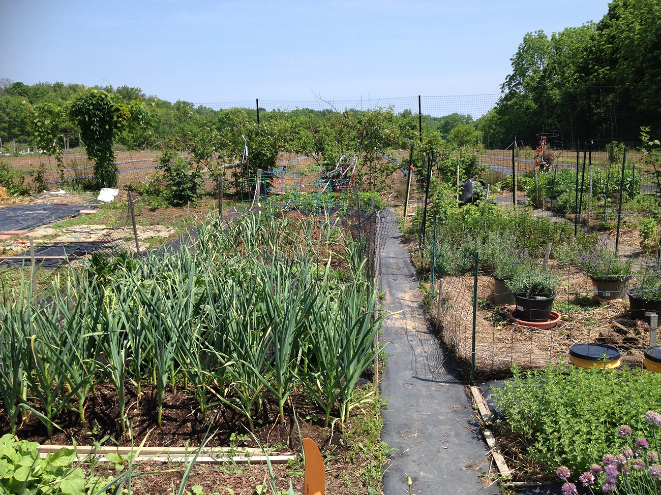 "Programs at the nature preserve include a community garden where people can rent 5x20 foot plots to grow their own produce. There's also a plant rescue program where volunteers collect thousands of unwanted plants from nurseries and grow and harvest them at the property to donate. ""Last year we rescued 5,000 plants and in 2018 we donated about 6,000 pounds of produce, about 99 percent of which goes to La Soupe,"" Vanessa Hannah says. / Image: Vanessa Hannah // Published: 2.25.20"