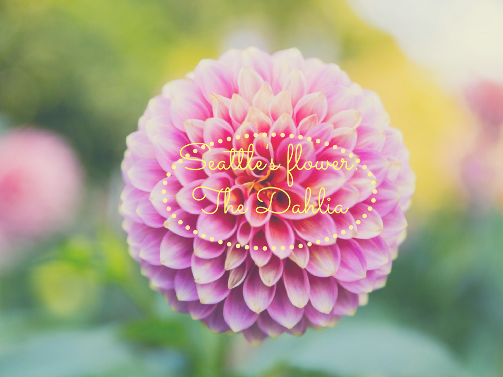 Fact #6. Seattle's Flower  The city of Seattle's flower is the Dahlia!