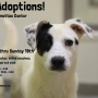 LHS starts $10 adoption special at Appomattox Center
