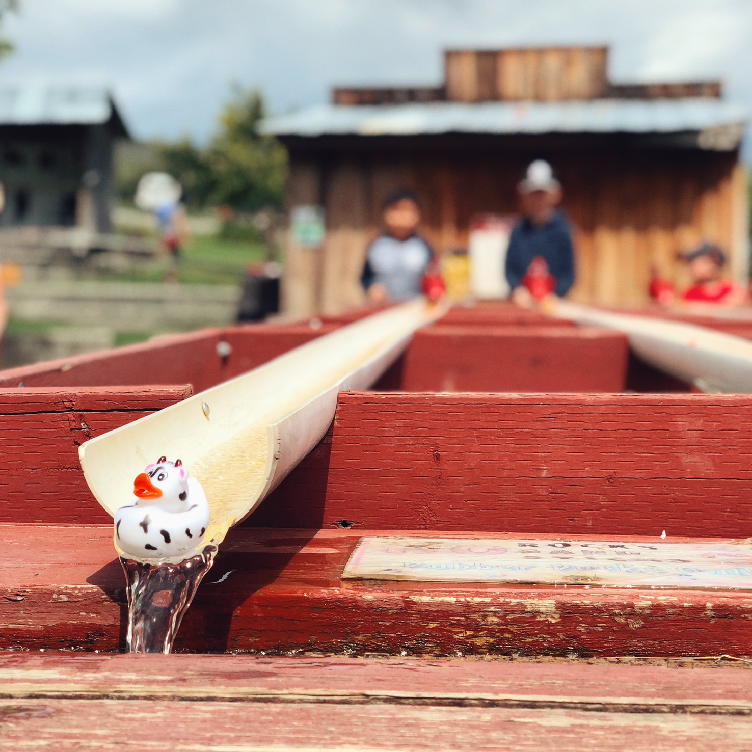 Davison Orchards Country Village Duck Races. (Image: Terumi Pong / Seattle Refined)