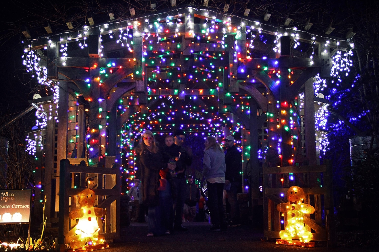 The Winter Lights exhibit at the North Carolina Arboretum on Dec. 17, 2016. This is the third year for the display, which runs through January 1, 2017.  Tickets can be purchased at the North Carolina Arboretum's website. (Photo credit: WLOS staff)