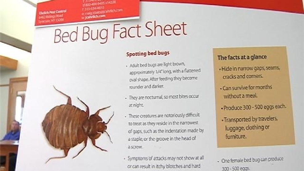Syracuse Among Worst Cities In Nation For Bed Bugs