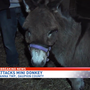 Bear attacks family's miniature donkey in Susquehanna Twp.