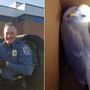 Maryland police officer rescues injured seagull, takes it to wildlife sanctuary