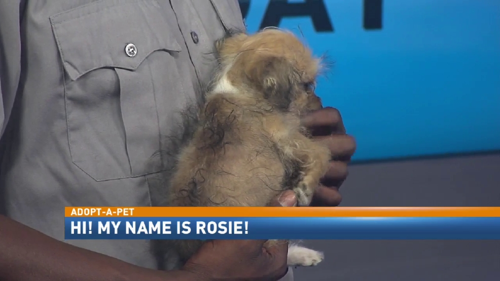 Animal Shelter In Mobile Al : Adopt a pet rosie wpmi