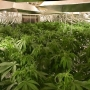 Pierce deputies find entire house used for pot grow