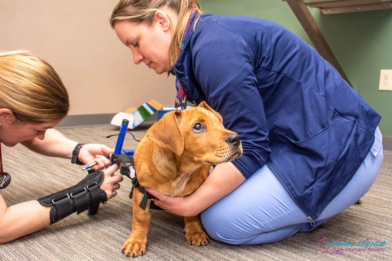 Some attentive caregivers help Trooper get fitted for his wheelchair. / Image courtesy of Animal Friends Humane Society // Published: 9.8.19{ }