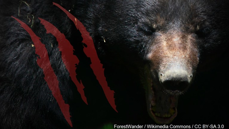 Man killed by injured bear after trying to take selfie. (Photo: MGN)
