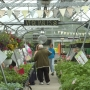 Greenhouse Project kicks off month long plant sale