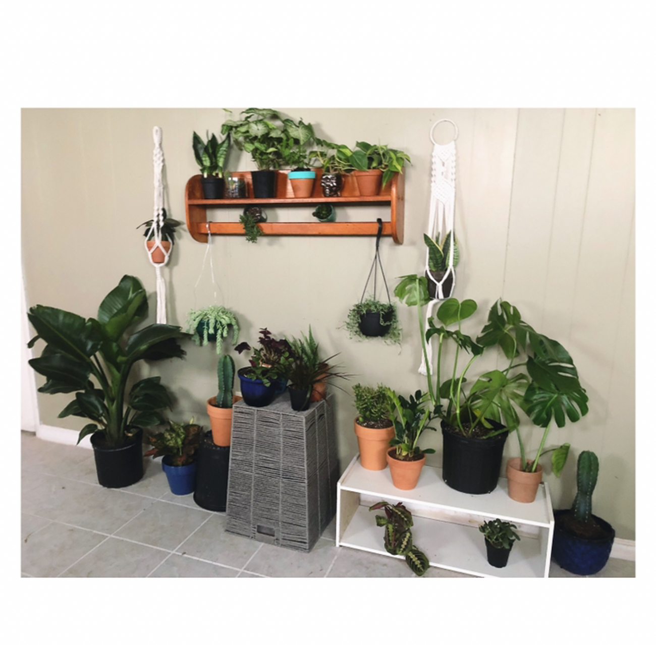 "Nichole Edwards (IG: @cincyplantlady) / ""My plant room is my wonderland. It's a place I can call my calm when things are crazy. I've had a lifetime love for plants but, never knew it would really be my thing. During self quarantine, I had lots of time to expand my collection and fall in love with my passion."" / Image courtesy of Nichole Edwards // Published: 6.13.20"