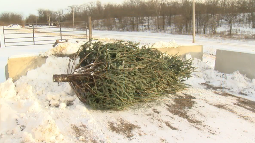 Christmas Tree Recycling In The Champaign-Urbana Area