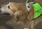 V-MISSION HEALTH THERAPY DOGS.transfer_frame_483.jpg