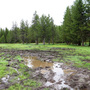 Open meadow badly damaged by mud-bogging in Boise National Forest