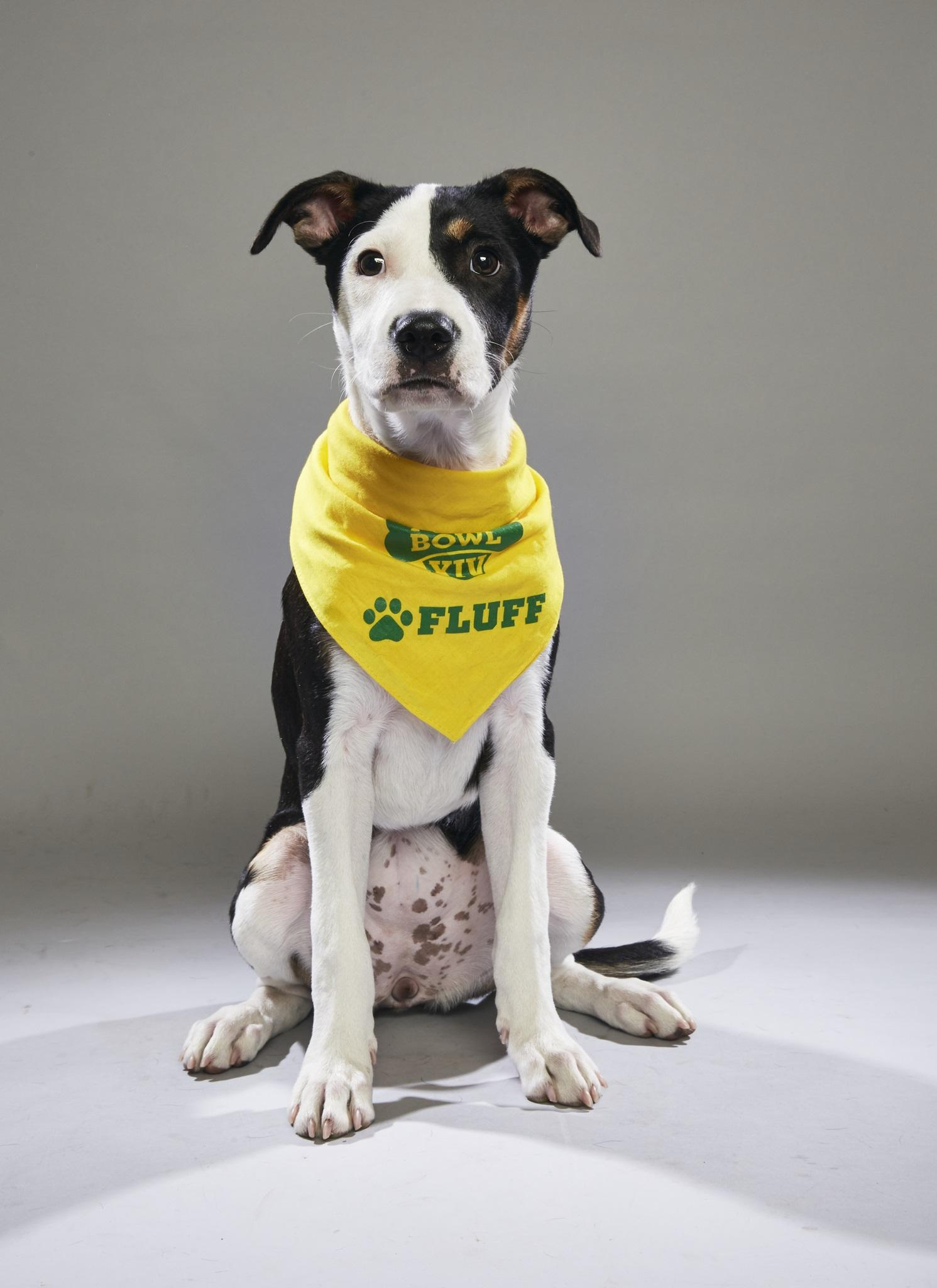 Iris will be seen in Animal Planet's Puppy Bowl.