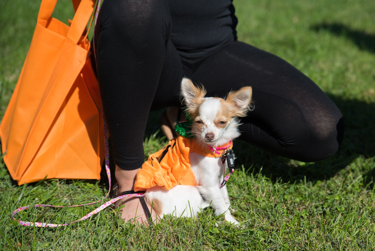 The sixth annual Spooky Pooch parade and festival took place on Saturday, October 14 in historic Glendale. The event benefitted local animal welfare organizations. / Image: Sherry Lachelle Photography // Published: 10.15.17
