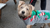 PHOTOS: Doggy Christmas Jumper Day in London