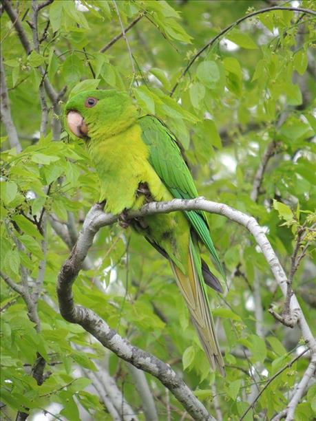 Spring parrot