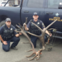 Three Oregon men plead guilty or no contest  to unlawfully poaching trophy elk