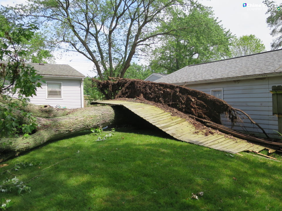 Tree roots point skyward after a large tree toppled in a Portage, Michigan, back yard, taking part of a fence with it June 9, 2020. Homeowner Michael Garfield shared the photo through our Chime In app. (WWMT/Chime In, Michael Garfield)