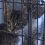 Midland County Humane Society hosts free cat adoption through August