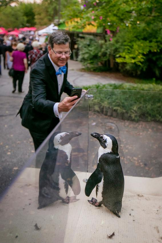 <p>Zoofari 2018: An Arctic Journey was held at the Cincinnati Zoo & Botanical Garden on Friday, September 14th. For over 30 years, the annual event has provided support for more than 500 animal and 3,000 plant species, conservation efforts, and outreach{&nbsp;}programs for local students. / Image: Mike Bresnen // Published: 9.15.18</p>