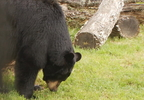 SPRINGTIME BEAR INCIDENTS_0002_frame_60622.jpg